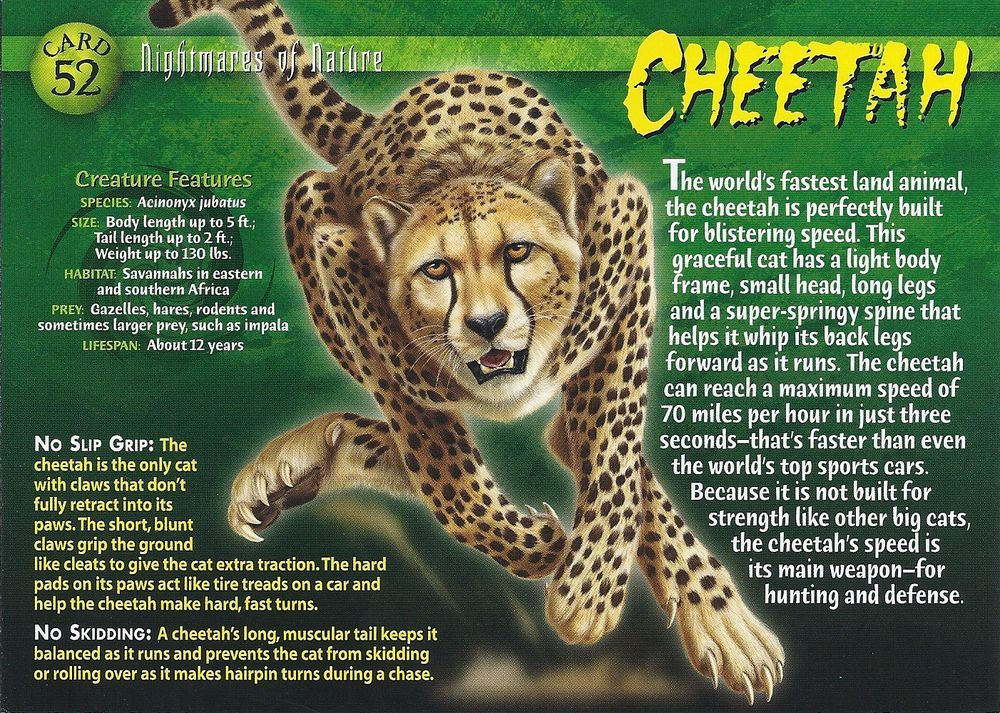 Cheetah Wild And Natural World Wild Creatures Animal Facts