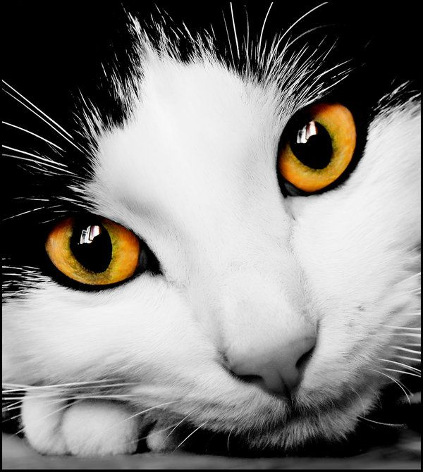 my cat by missayawaska.deviantart.com on @deviantART