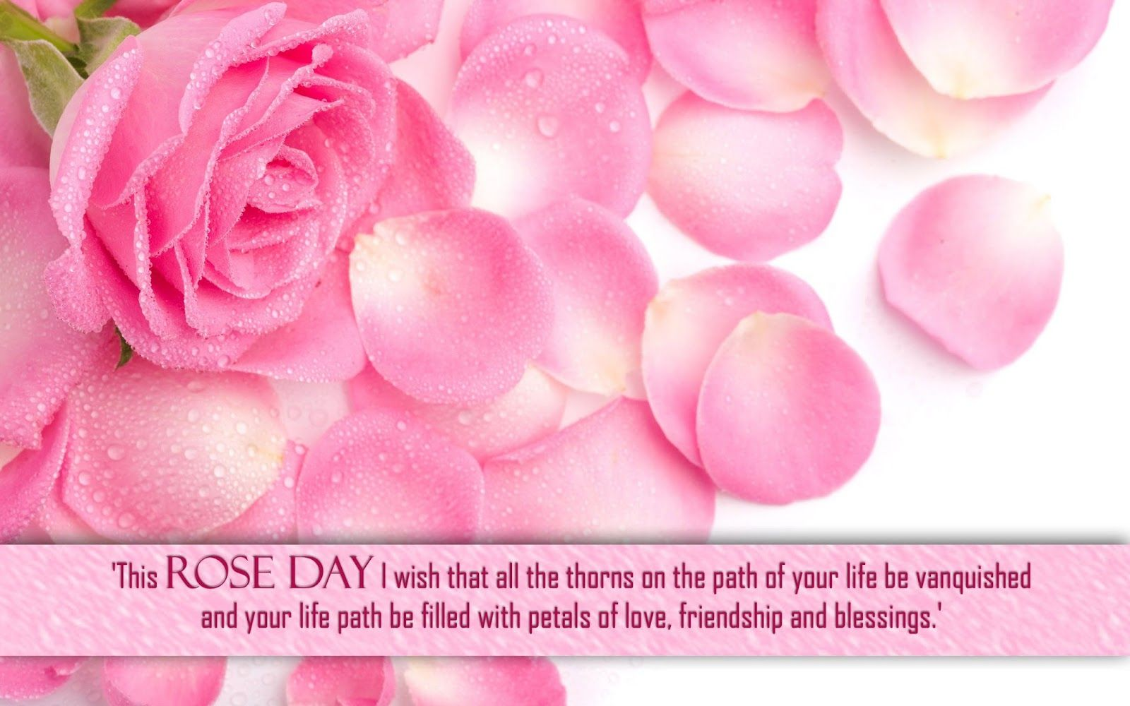 Happy Rose Day Images Hd And Wallpapers Badhaai Feed Pinterest