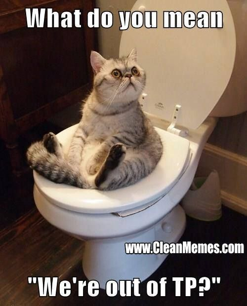 4bd4603531e6dabdbbe245b84143fa05 cleanmemes cleanfunnyimages www cleanmemes com cats pinterest