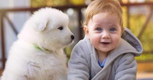"""MiniFarmEffekt"" Haustiere schützen Kinder vor"