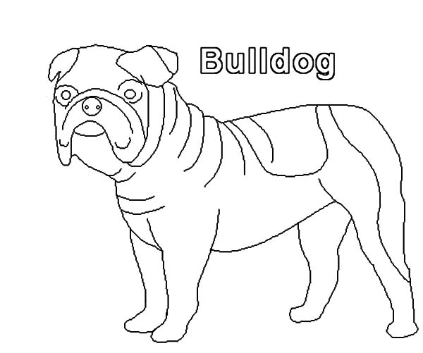 How To Draw Bulldog Coloring Pages Best Place To Color Coloring Pages Drawings Bulldog