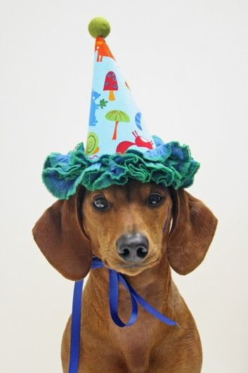Brown Weiner Dog Loving Rocking Out A Party Hat