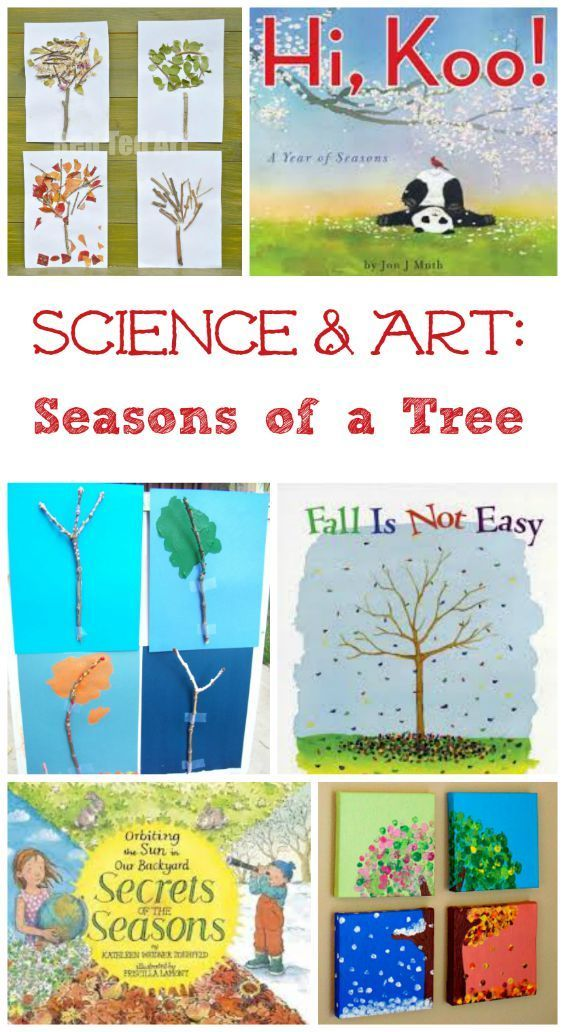 science art the four seasons of a tree science science art preschool science science. Black Bedroom Furniture Sets. Home Design Ideas