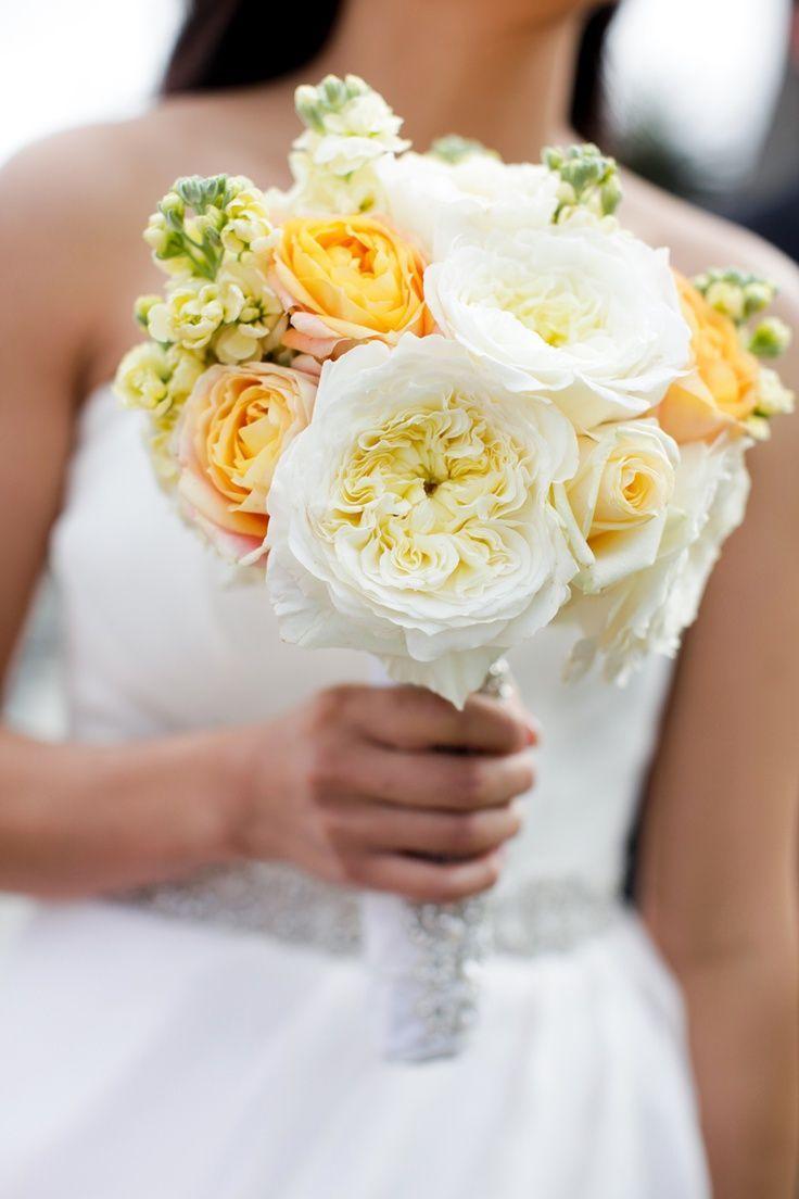 Imagini pentru david austin patience garden rose bridal