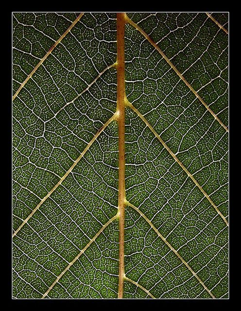 Geometry Nature Geometry In Nature Geometric Nature Maths In Nature