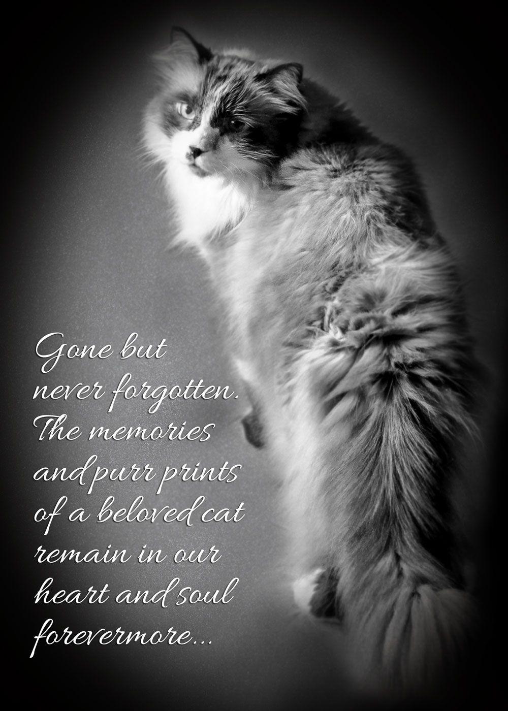 Sympathy card for cat loss | Zazzle.com in 2020 | Cat loss, Pet quotes cat,  Pet loss quotes