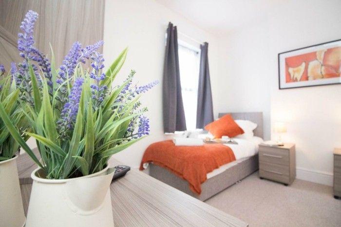 Zimmerpflanzen Schlafzimmer ~ Gruene zimmerpflanzen heilkráeuter lavendel strauch schlafzimmer