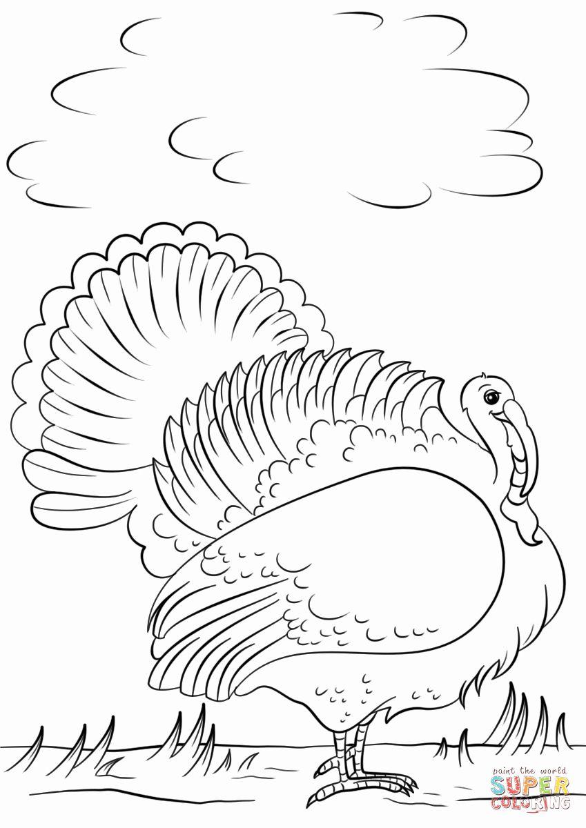 Cartoon Turkey Coloring Page Fresh Cartoon Turkey Coloring