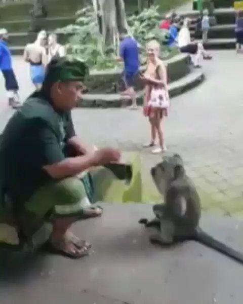 Pinter banget, temennya siapa nih . . Cr punapibali jhocristyan . . Lokasi : Monkey Forest Ubud, Gianyar Video credit : fb/Bali Island Tour #hiburansiang #monkeyforest #ubud #infotentanghewan #infohewan #Savethem #saveanimals #world #nature #sea #forest #life #animals #animal #pet #dog #cat #dogs #cats #cute #pets #love #selfie #nofilter #instagramtags #webstagram