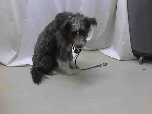 Texas Id A397393 Is An Old English Sheepdog Mix In Need Of A Loving Adopter Rescue At Harris County Pu With Images Stop Animal Cruelty Poor Dog Old English Sheepdog