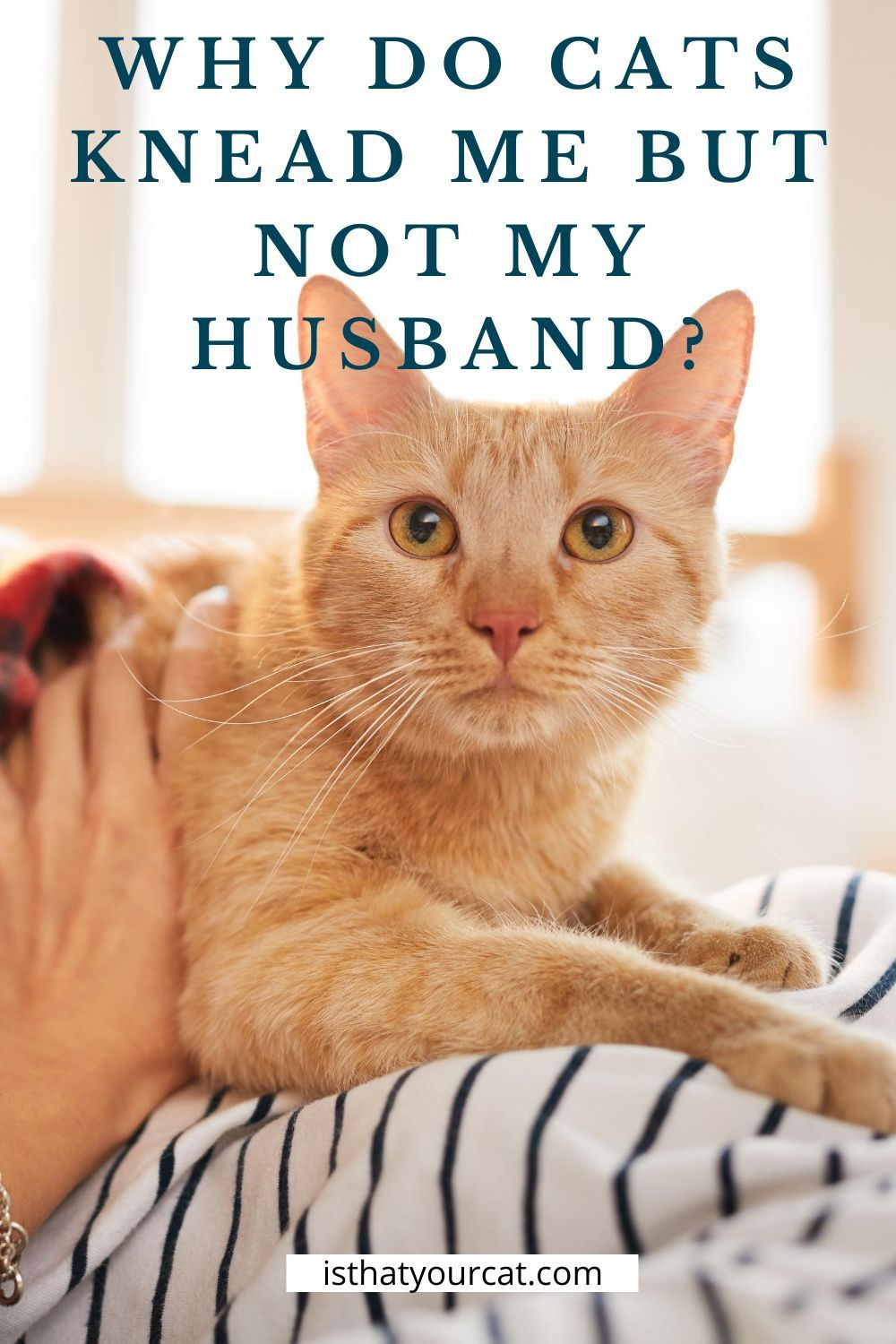 Why Does My Cat Knead Me And Not My Husband? Behavior in