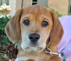 Adopt Grizzley On Puppies Dog Mixes Cute Puppies