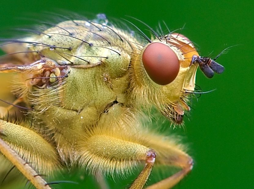 Best World Of Macro Images On Pinterest Macro Photography - Each of these macro bug photographs is made from thousands of individual images