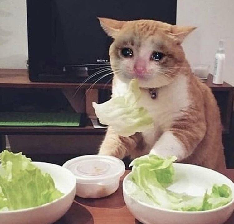 Pin em Crying Cat Memes