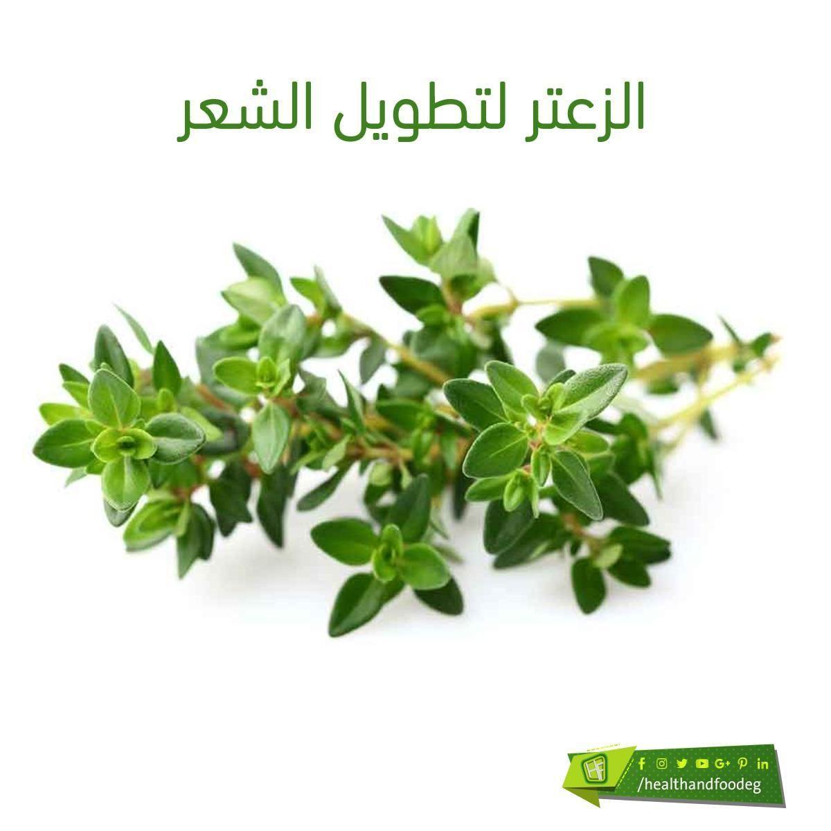 الزعتر لتطويل الشعر Herbs Food Parsley