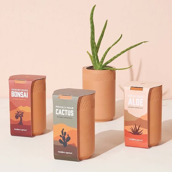 Modern Sprout Terracotta Assorted Grow Kit In 2020 Grow Kit Healing Aloe Plant Bud