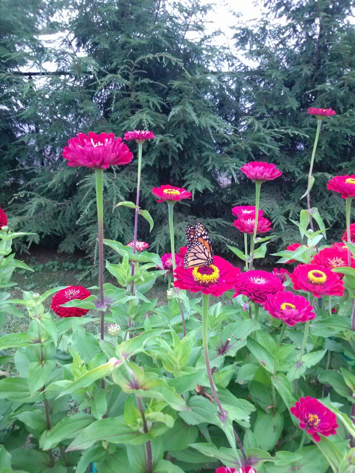 Fdr memorial garden hyde park ny memorial garden
