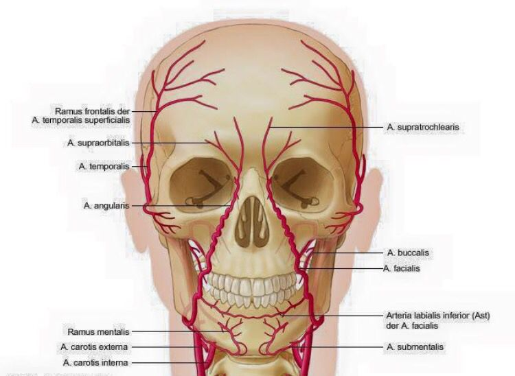 Knowledge of facial anatomy is an essential not a desirable criteria ...