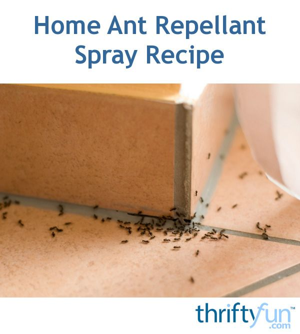This Homemade Ant Spray Can Help Repel Ants Both Inside And Outside Page Has A Recipe For Making Repellant