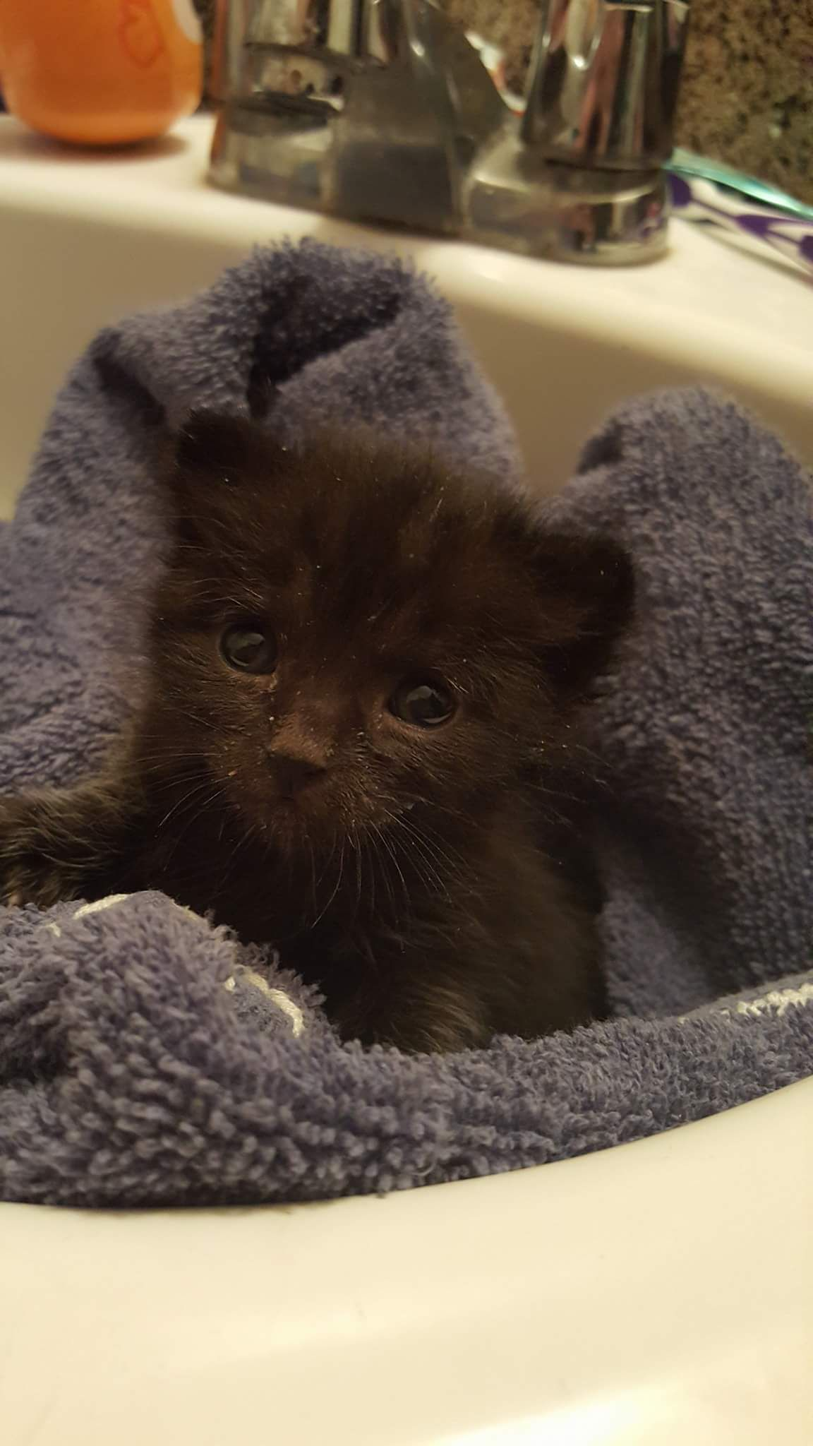 Girlfriend Wanted To Rescue A Kitten I Said No Meet My New Kitten Rafiki Http Ift Tt 2obl6z8 Kitten Rescue Cute Animal Pictures Baby Dogs
