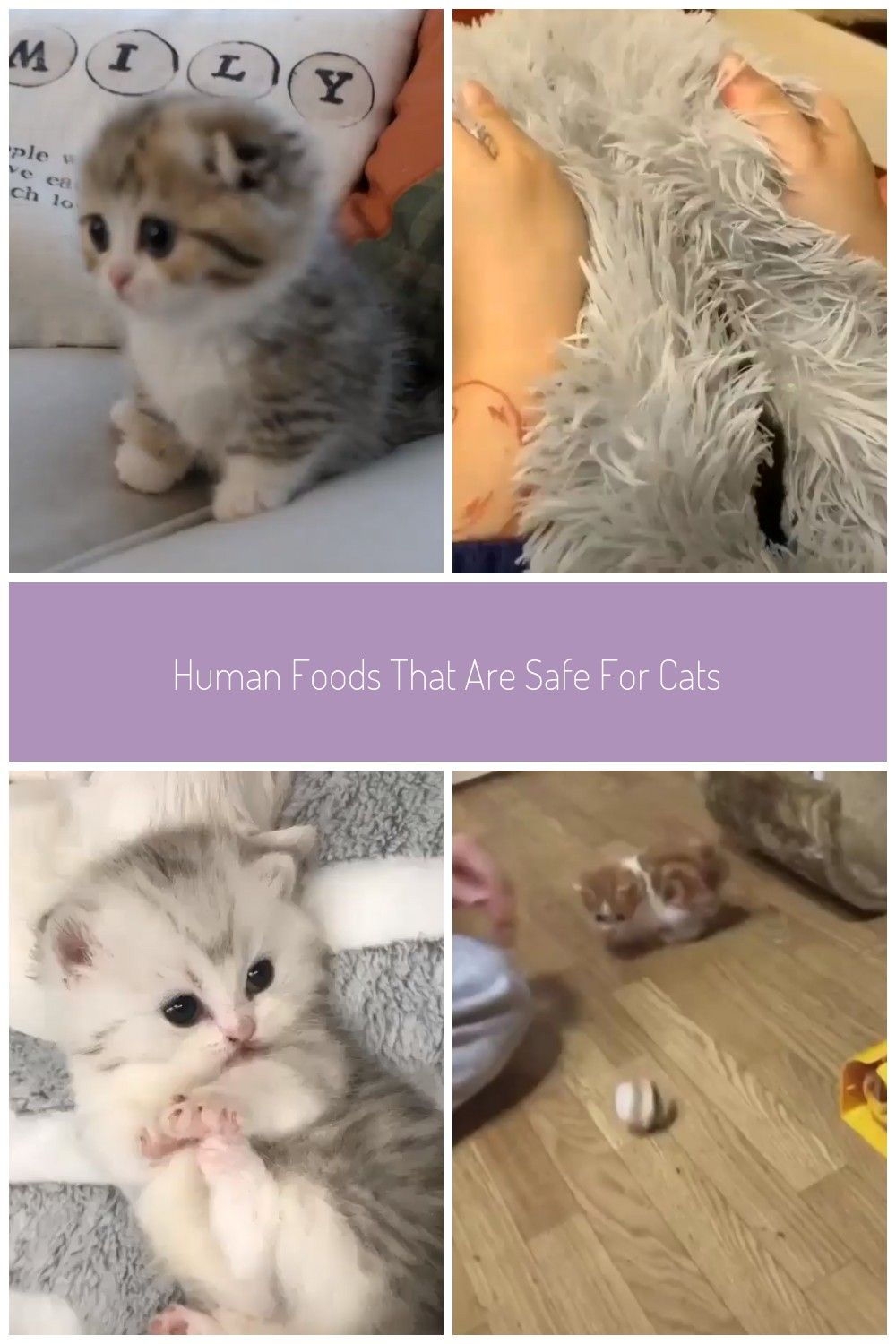 Human Foods That Are Safe For Your Cats Adorable Kittens Cats Baby Cats Cute Cat Gif