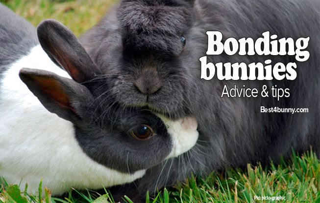Bonding bunnies - advice & tips Find out how we bonded our bunnies here... http://best4bunny.com/bonding-rabbits-bond-bunnies/