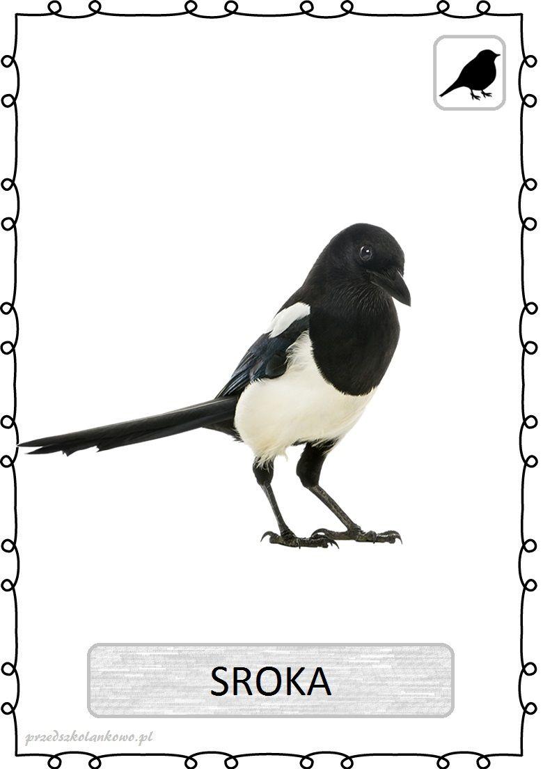 Znalezione Obrazy Dla Zapytania Sroka Ptak Do Drukowania Przedszkolankowo Animals Bird Birds