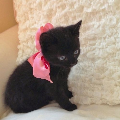 Little Black Cat With A Pink Bow Cute As A Kitten Cute