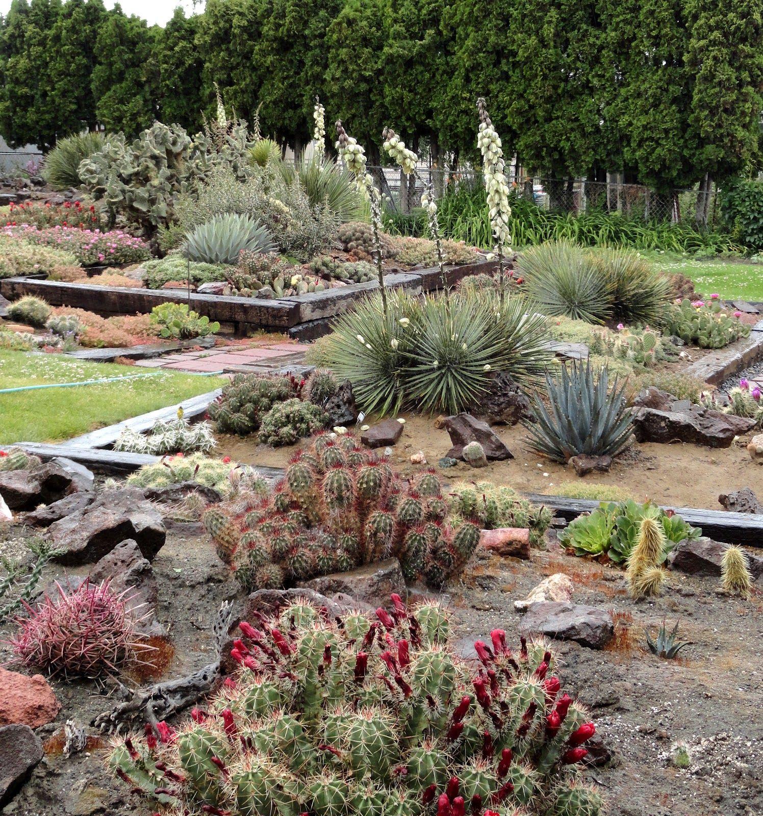 Hillside Desert Botanical Gardens As Featured On Ed Muir S Nw Postcards Yakima Washington Desert Backyard Desert Botanical Garden Hardscape Backyard