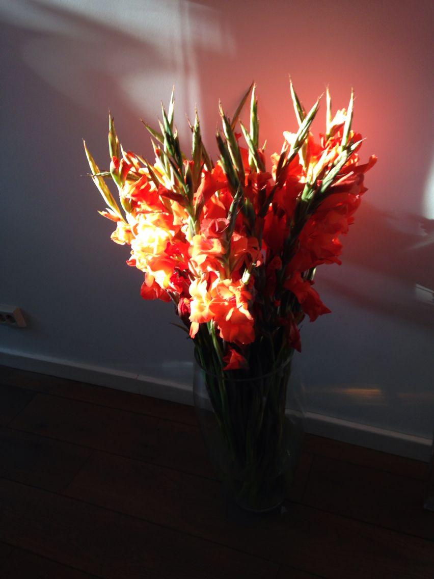 Beautifull flowers in the morningsun