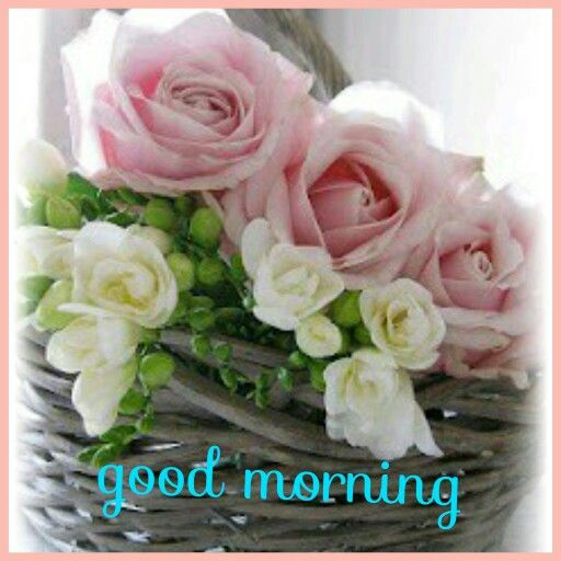 Good Morning Pink Rose With Images Flower Quotes Morning