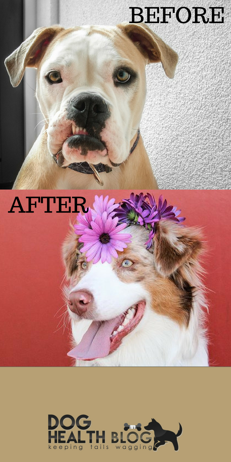 Your Dog Will Go From An Old Grump To A Happy Pup After Trying