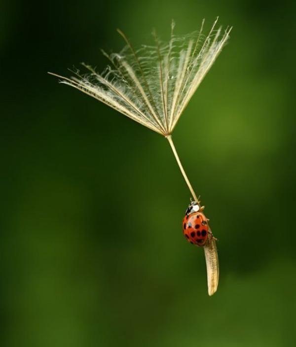 Fly, Ladybug!