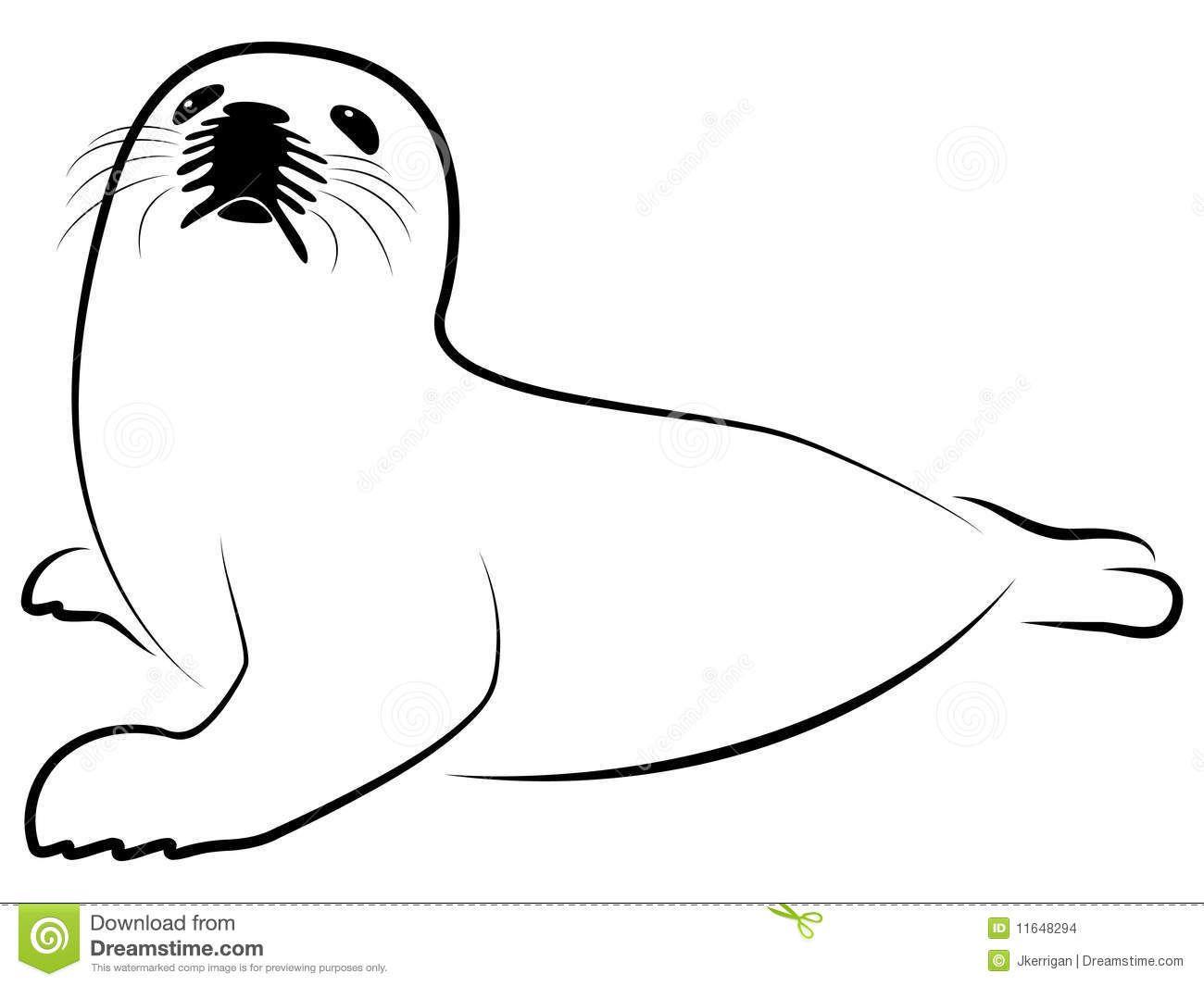 Baby Harp Seal Stock Images Image 11648294 Baby Harp Seal Drawings Harp Seal