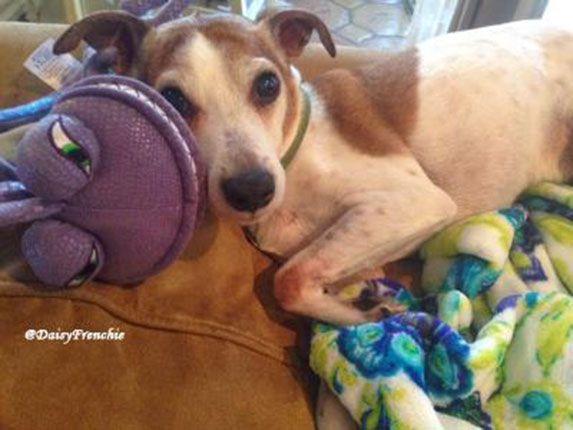 Vet Approved Articles Pet Memorials Cute Dog Photos Pets