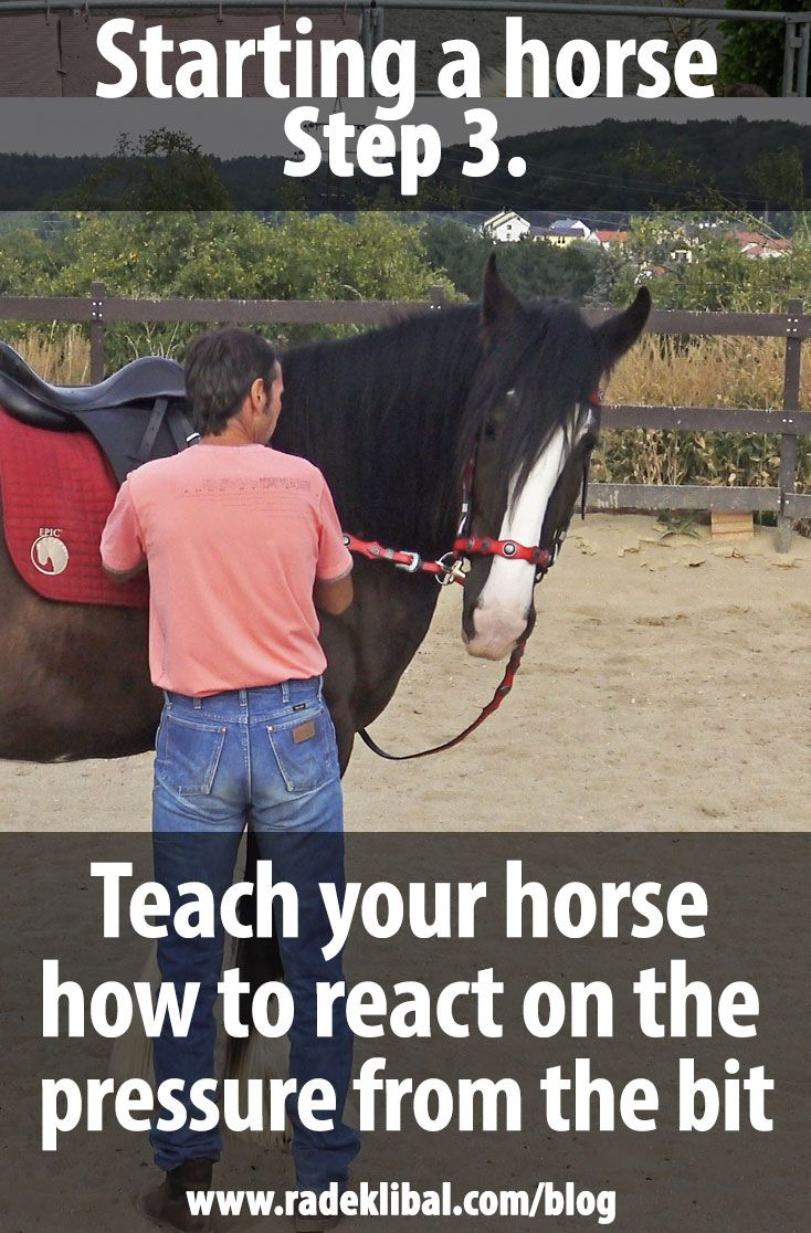 12 steps to starting your horse without drama in 2020