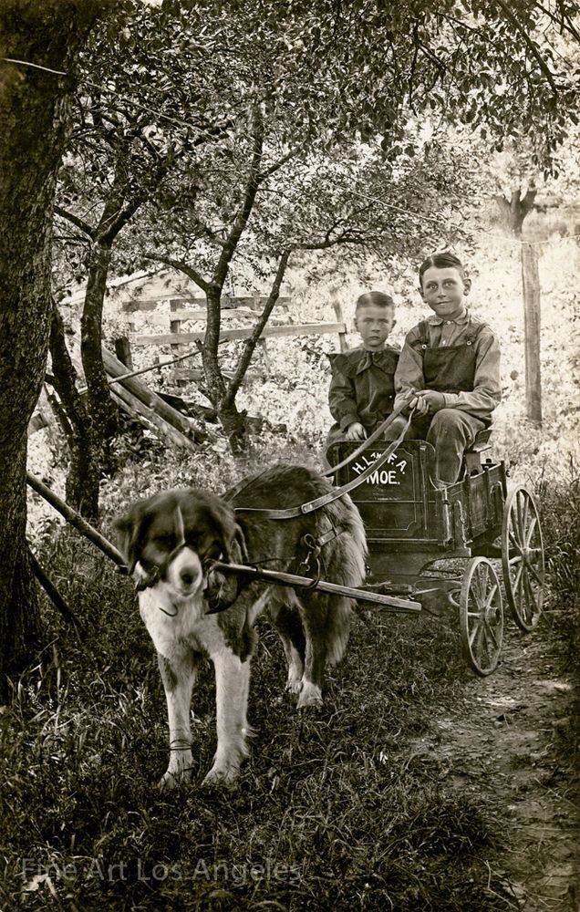 PET EMPLOYEE: Boys, cart and harnessed dog, 1900.