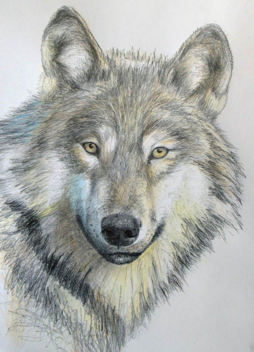 drawn wolves