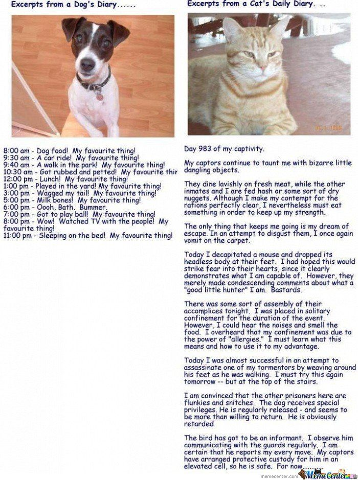 Hahaha, Excerpts From Cat Diary And Dog Diary Crazy cat