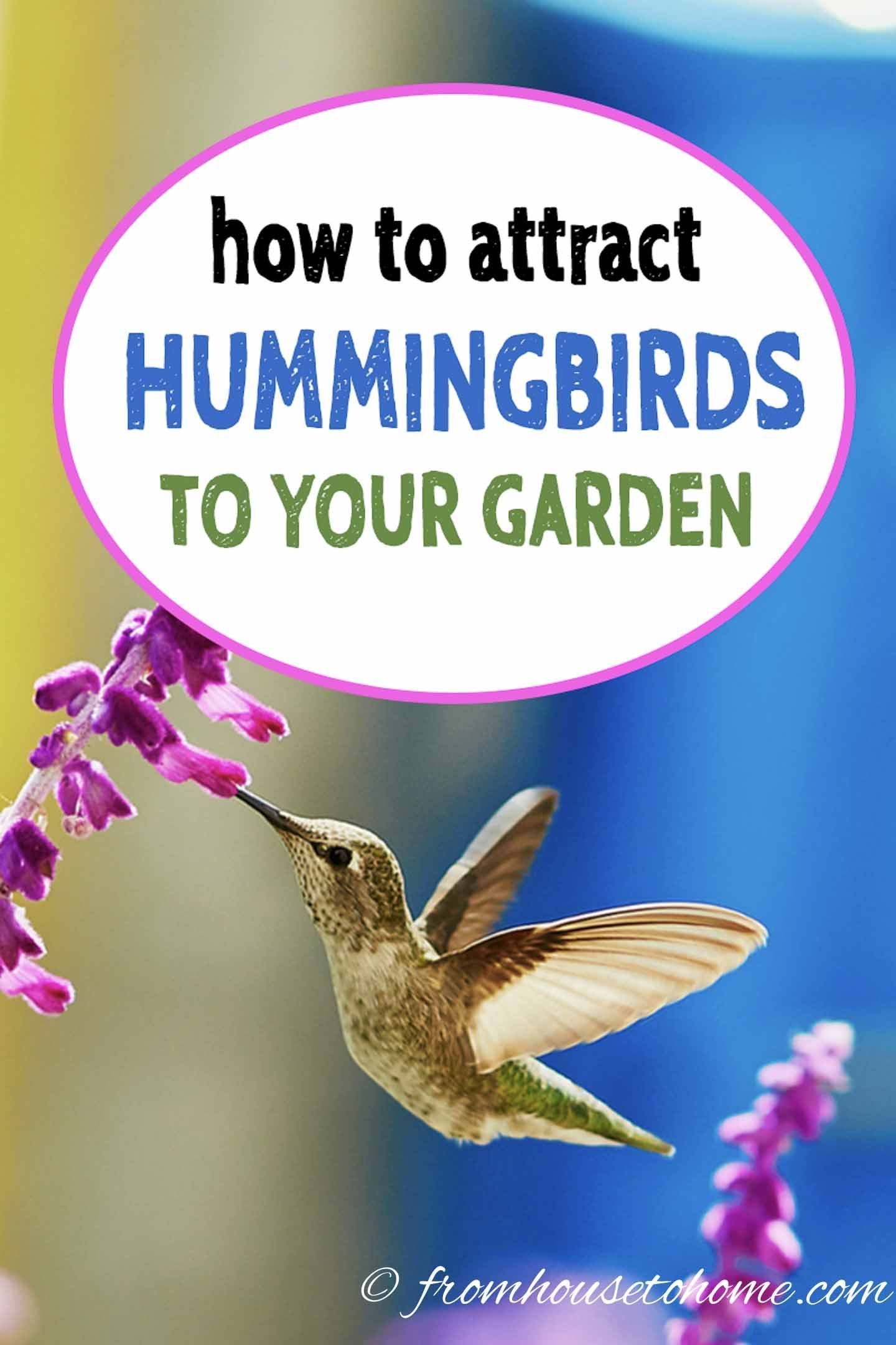 Attract hummingbirds to your garden 10 tips you can use