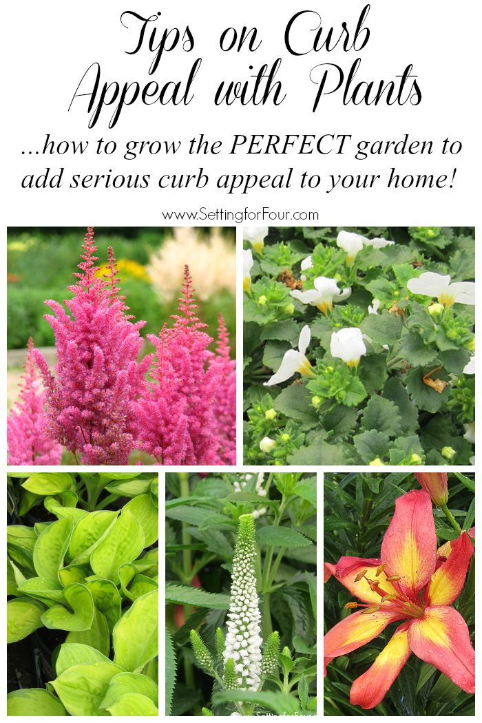 Awesome tips on Curb Appeal with Plants! How to grow the PERFECT colorful, easy care garden to add some dramatic curb appeal! More gardening tips, inspiration and plant info at www.settingforfour.com