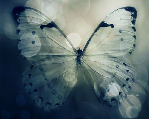 """Awakening is not a thing. It is not a goal, not a concept. It is not something to be attained. It is a metamorphosis. If the caterpillar thinks about the butterfly it is to become, saying """"and then I shall have wings and antennae"""" there would never be a butterfly. The caterpillar must come to accept it's own disappearance in the transformation. And when the marvelous butterfly takes wing, nothing that was the caterpillar remains ~Alejandro Jodorowsky"""