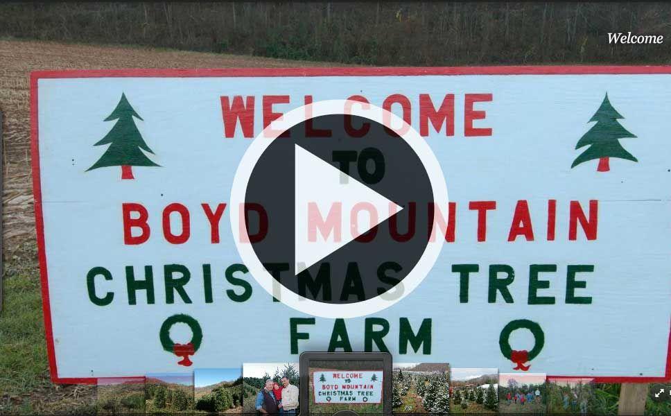 Boyd Mountain Christmas Tree Farm Christmas Tree Farm Tree Farms Tree