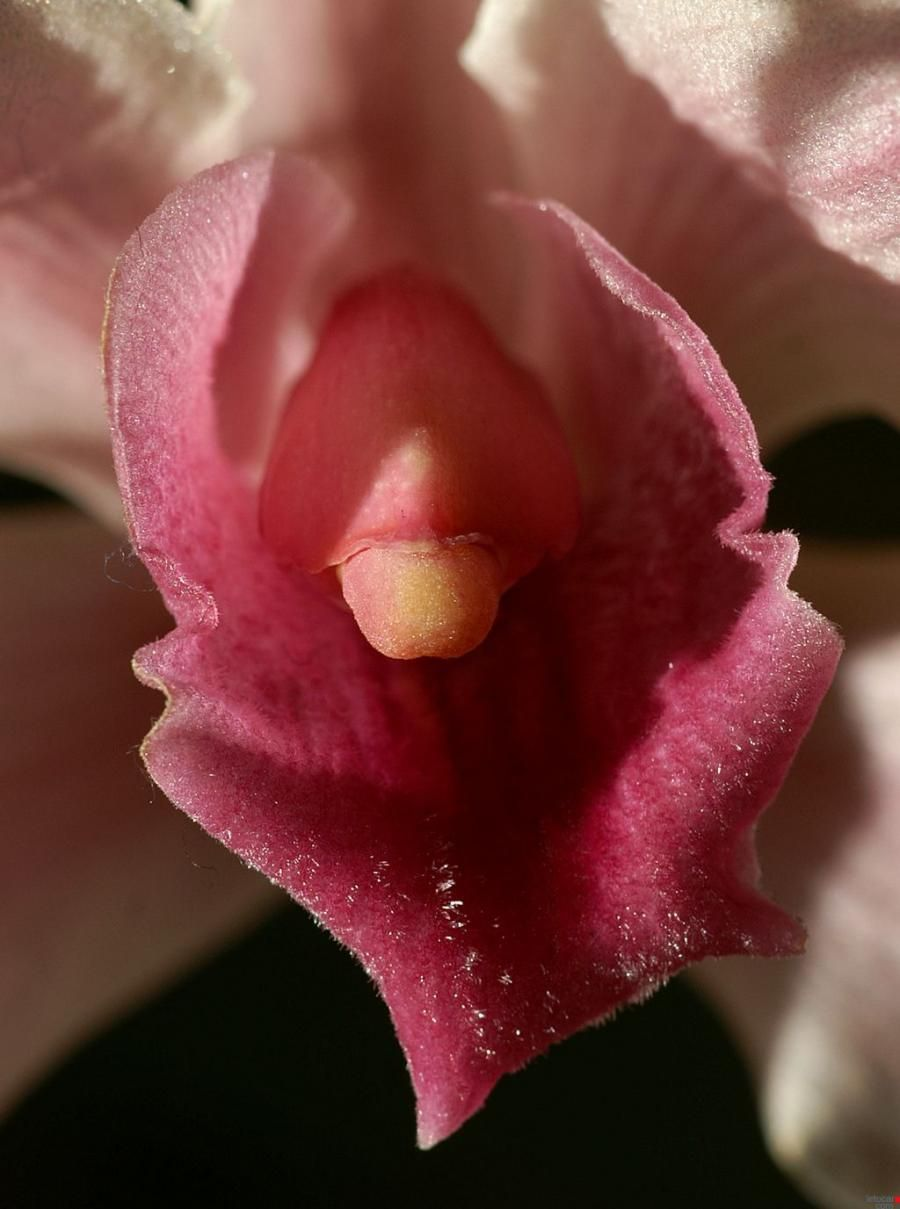 Pin by cathline vega on plants and flowers in 2018 pinterest nature brings forth the most beautiful vaginas on this planet take a look at these amazing beauties izmirmasajfo