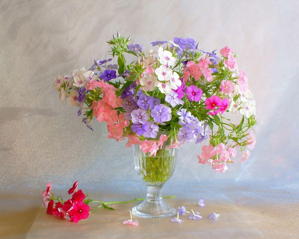 фото цветы в вазочке