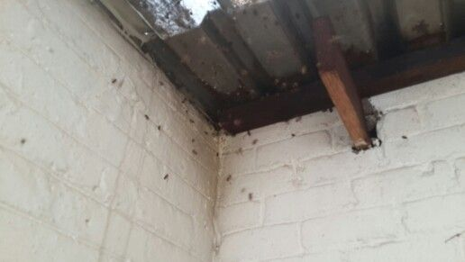 Bee removal in Johannesburg in sandton bees in a roof