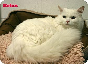 Melbourne Ky Domestic Longhair Meet Helen A Cat For Adoption