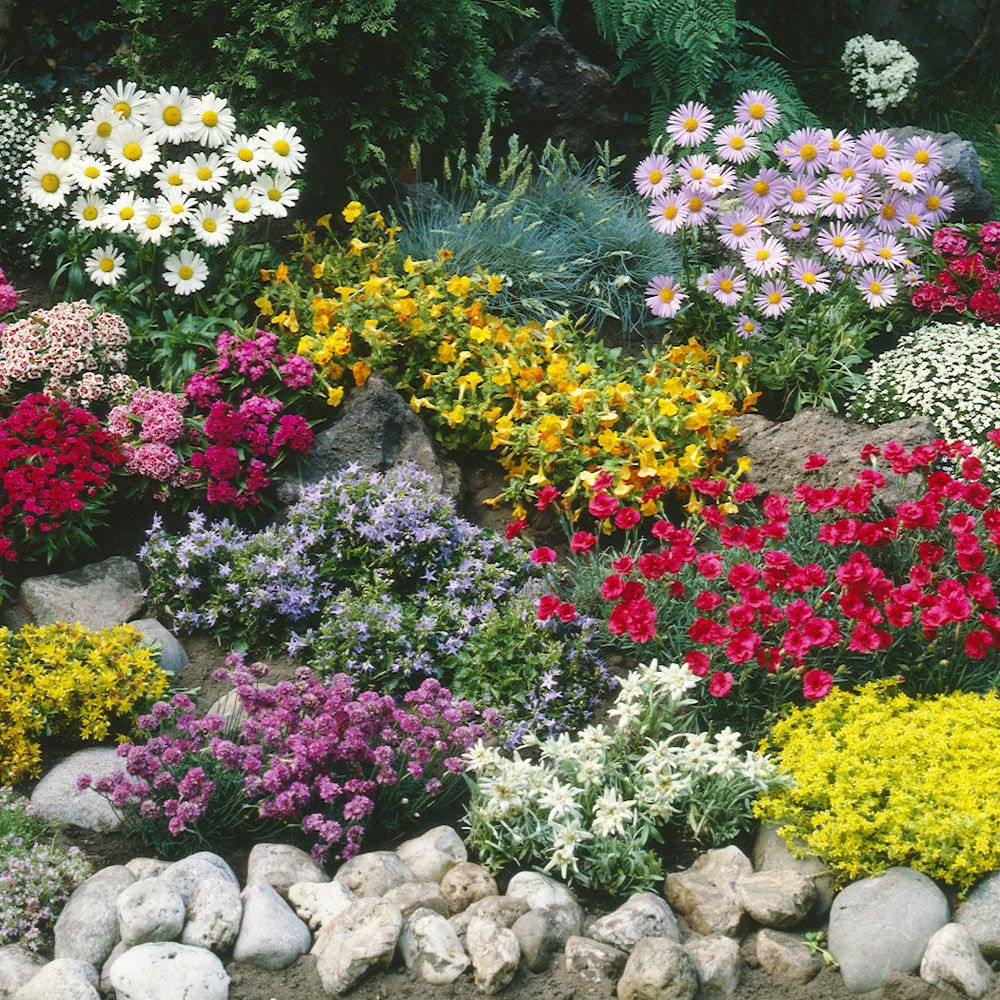 Buy Ground Cover Plant Collection J Parker's Beautiful