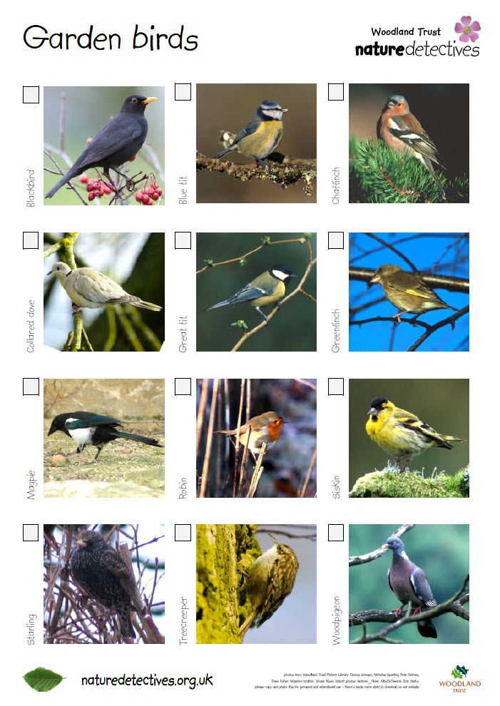 Bird Spotter Sheets A Very Helpful Checklist And Images Of
